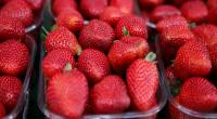 Australia offers $70,000 reward as strawberries sabotaged with needles