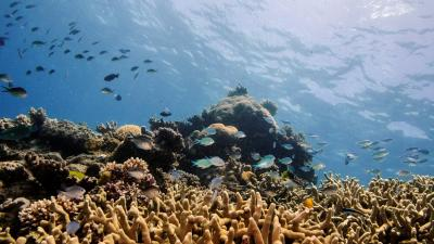 'Runaway warming could sink fishing and reef tourism'