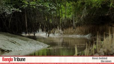 Tk 250m project to revamp Sundarbans tourism