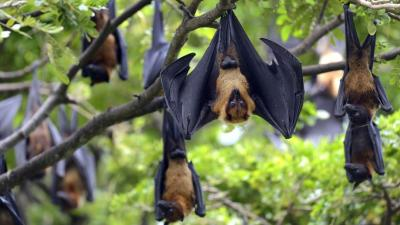 Fresh Nipah infected patient at KMCH