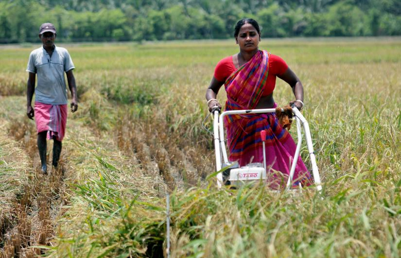 This undated photo shows a woman working in a paddy field in Khulna. PHOTO/BRAC